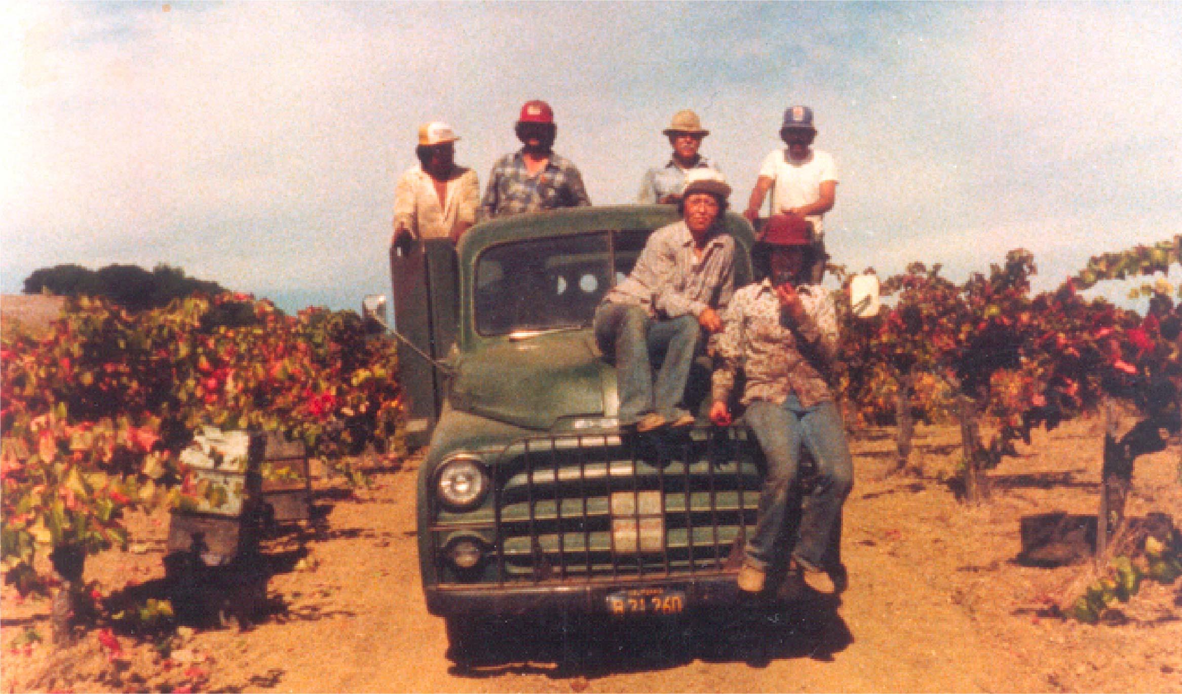 Vineyard workers during harvest.