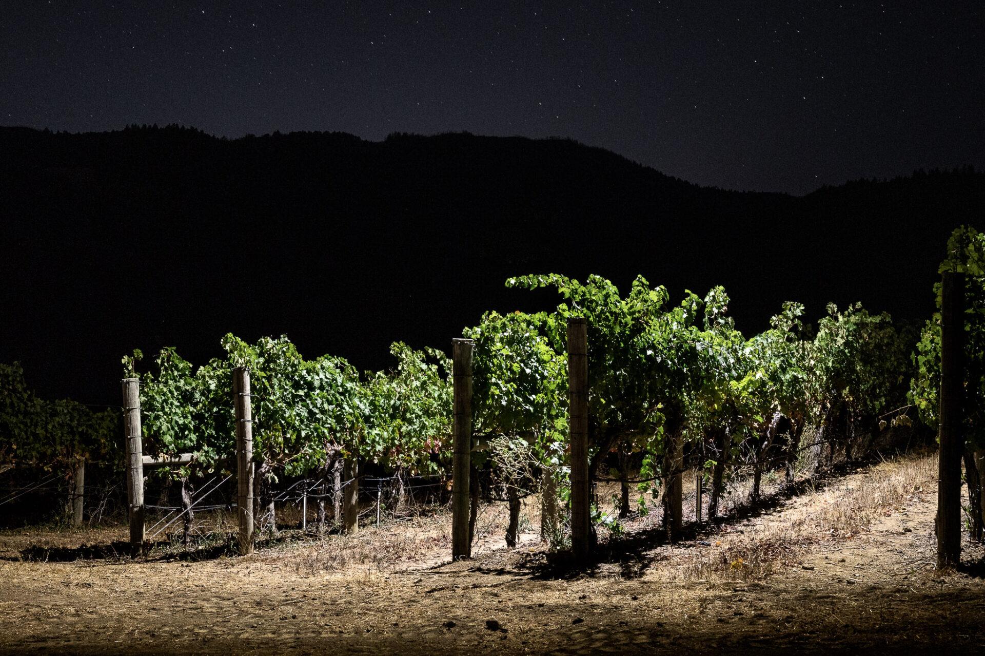 Brandlin estate vineyard at night